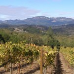 Want to run a Wine Country Half Marathon?